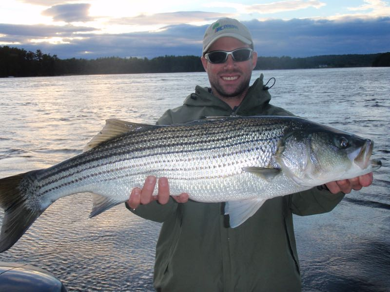 Maine Striper Fishing Charter