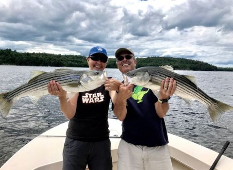 Another Great Day of Striper Fishing on the Kennebec River